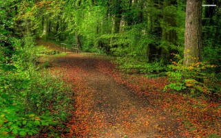 Forest Path Leaves Bridge wallpapers and stock photos