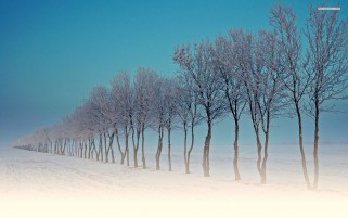 Frosty Trees Snowy Fields Sky wallpapers and stock photos