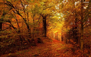 Forest Path & Golden Autumn wallpapers and stock photos