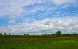 Gras Field Arable Trees Clouds wallpapers and stock photos