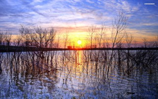 Nice Pond Dark Trees Sunset wallpapers and stock photos