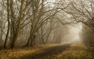 Random: Bare Trees Forest Path Foggy