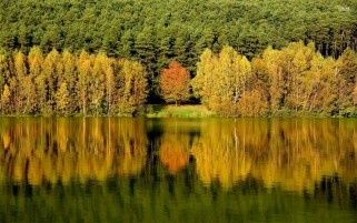 Autumn Forest Lake Reflection wallpapers and stock photos