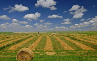 Prairie Wheat Farm Sky Canada wallpapers and stock photos