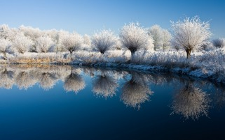 Winter Trees Row Blue Lake wallpapers and stock photos