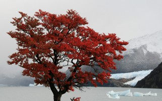 Red Tree Santa Cruz Province wallpapers and stock photos