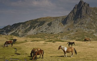 Random: Horses Rila Mountains Bulgaria