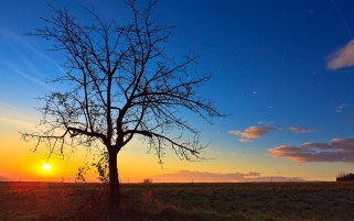 Beautiful Black Tree Field Sun wallpapers and stock photos