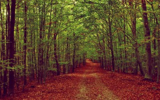 Thick Green Forest Red Carpet wallpapers and stock photos
