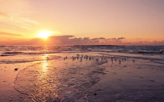 Sunset Ocean Sea Gulls Beach wallpapers and stock photos