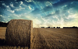 Hay Bale Harvesting Field Sky wallpapers and stock photos
