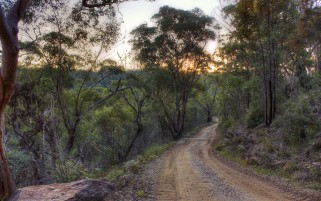 Wald Hilly Way Sun Australien wallpapers and stock photos