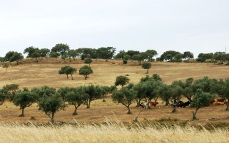 Alentejo Portugal One wallpapers and stock photos