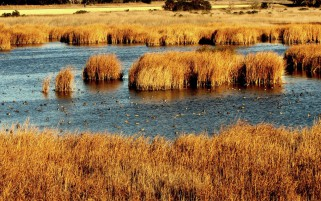 Coyote Hills San Francisco Bay wallpapers and stock photos