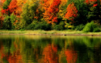 Autumn Trees Grass Shore Lake wallpapers and stock photos