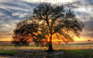 Wonderful Tree Field Sun Light wallpapers and stock photos