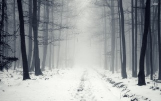 White Path Black Trees Foggy wallpapers and stock photos