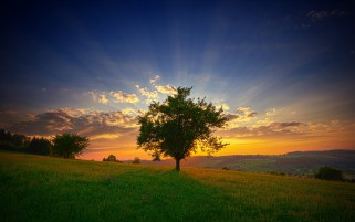 Sunset Hills Trees Swiss wallpapers and stock photos