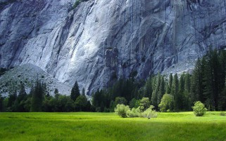 Rocks Grass Forest Yosemite wallpapers and stock photos