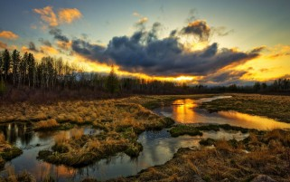 Forest Swamp Gras Sunset Cloud wallpapers and stock photos