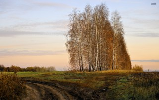Birch Trees Muddy Path Sky wallpapers and stock photos