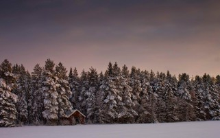 Winter Forest Cabin Snowy Sky wallpapers and stock photos