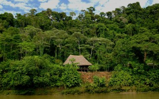 Rain Forest Booth Ecuador wallpapers and stock photos