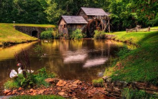 Old Mill Pond Geese Scenery wallpapers and stock photos