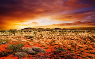 Desert Plantele Orange Sand Sky wallpapers and stock photos