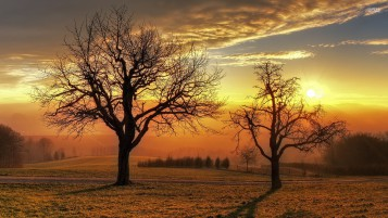 Bare Trees Field Golden Sunset wallpapers and stock photos