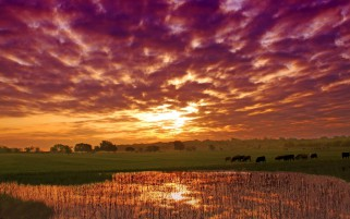 Animals Scenery Pink Clouds wallpapers and stock photos