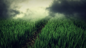 Green Field Fog wallpapers and stock photos