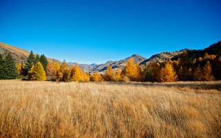 Mountains Autumn Trees Grass wallpapers and stock photos