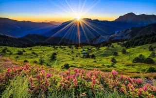 Mountain Hill Flower Shiny Sun wallpapers and stock photos