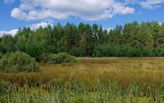 Green Forest Pond Grass Bushes wallpapers and stock photos