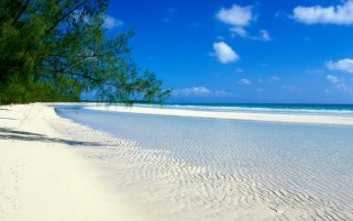 White Beach Ocean Trees Sky wallpapers and stock photos