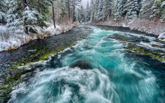Snowy Forest & Green Stream wallpapers and stock photos