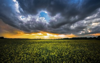 Rape Field Stormy Sky Sunset wallpapers and stock photos
