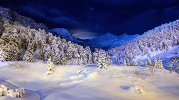 Random: Stunning Snow Trees Blue Night
