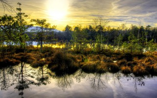 Lovely Swamp Trees Sunshine wallpapers and stock photos
