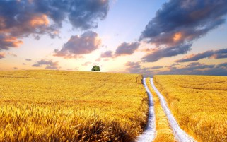 Golden Fields & Road Ukraine wallpapers and stock photos