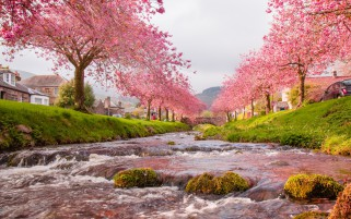 Rushing River Pink Trees House wallpapers and stock photos