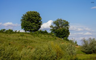 Green Trees Plants Hill Sky wallpapers and stock photos