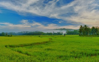 Random: Philippines Paddy Fields