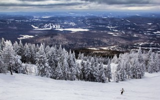 Nice Winter Forest Quebec wallpapers and stock photos