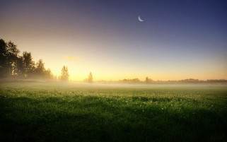Meadow Trees Morning Foggy wallpapers and stock photos