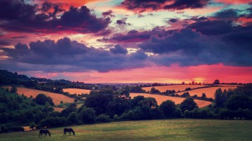 Hills Trees Horses Pink Sunset wallpapers and stock photos