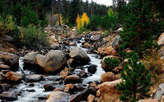 Amazing Rocks Creek & Forest wallpapers and stock photos
