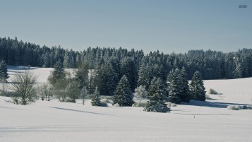 Snowy Field & Pine Forest wallpapers and stock photos