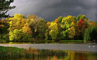Autumn Trees Gray Lake Stormy wallpapers and stock photos